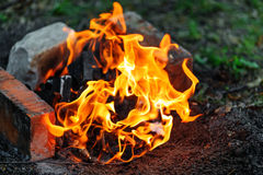 Campfire in evening Royalty Free Stock Photo