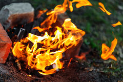 Campfire in evening Royalty Free Stock Photography
