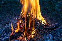 Campfire. Fire for cooking royalty free stock photo