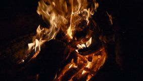 Campfire flame close-up. Hd stock footage stock footage