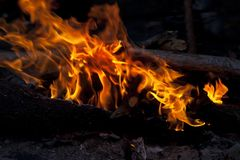 Campfire in forest Royalty Free Stock Photography