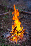 Campfire in forest Stock Images