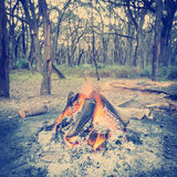 Campfire In Forest Instagram Style Stock Images