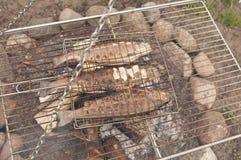 campfire grillad forell Arkivfoton