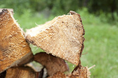 A campfire log stacked on pile Royalty Free Stock Photo