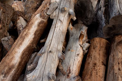 Campfire logs Royalty Free Stock Photo