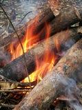 Campfire in Malaysia Rainforest stock photo
