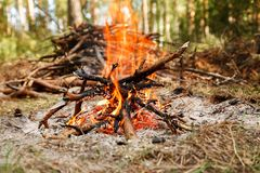 Campfire near pile of dry firewood in the forest.  stock photo