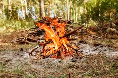 Campfire near pile of dry firewood in the forest.  royalty free stock photos