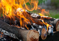 Campfire, picnic in a forest. Big bonfire outdoors. Close-up. Campfire, firewood, picnic Royalty Free Stock Image