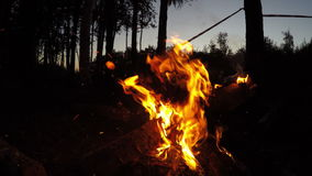 Campfire wide shot in summer evening in forest stock footage