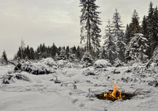 Campfire in the winter forest Royalty Free Stock Photography