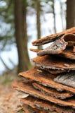 Campfire wood bark stacked Royalty Free Stock Photos