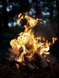 Campfires of firewood. Campfires from dry birch firewood in the forest Royalty Free Stock Image