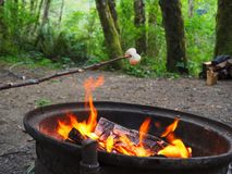 Campground Fire with Marshmallow in Forest Royalty Free Stock Photography