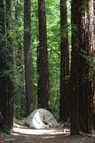 Campground and Tent at Big Basin Redwoods State Park royalty free stock photography