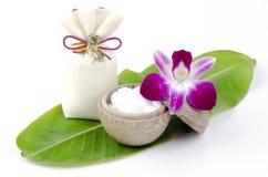 Camphor (Cinnamomum camphora (L.) JS Presl). Royalty Free Stock Images