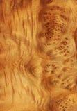 Camphor's root (wood texture) Stock Photos