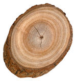 Camphor Tree Block Royalty Free Stock Image