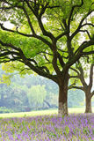 Camphor trees in the park Royalty Free Stock Photography