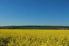 Campi agricoli degli agricoltori coltivare con il seme di ravizzone giallo del canola Fotografia Stock Libera da Diritti