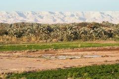 Campi all'oasi di Dahla, Fotografia Stock Libera da Diritti