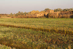 Campi all'oasi di Dahla, Fotografia Stock