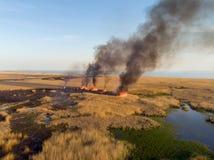 Campi brucianti delle canne sulla linea costiera del mare Vista dell'occhio del ` s dell'uccello Fotografie Stock