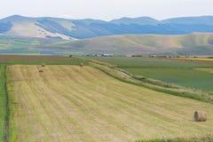 Campi colorati con le balle in piano grande, Monti Sibillini NP, U Fotografia Stock Libera da Diritti