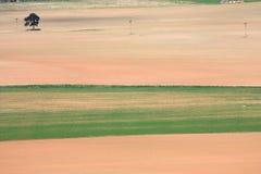 Campi colorati dell'azienda agricola Fotografie Stock Libere da Diritti