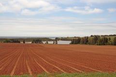 Campi coltivati di isola Principe Eduardo, Canada fotografia stock libera da diritti