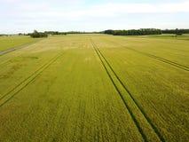 campi con i grani fertili Fotografia Stock Libera da Diritti