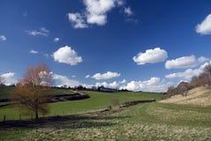 Campi in Cotswold. L'Inghilterra Fotografia Stock