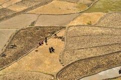 Campi d'aratura nel Nepal Immagine Stock Libera da Diritti