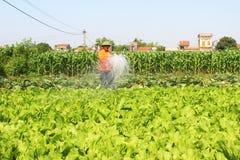 Campi d'innaffiatura delle verdure dell'uomo Immagini Stock Libere da Diritti