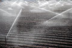 Campi d'irrigazione Immagini Stock