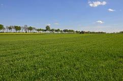 Campi dei raccolti verdi nel paese Immagine Stock Libera da Diritti