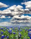 Campi del Bluebonnet nel Texas Fotografie Stock Libere da Diritti