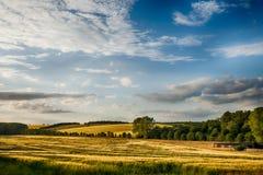 Campi del paesaggio dorato di inglese del grano Fotografie Stock