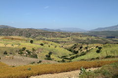 Campi del raccolto e di agricoltura in Etiopia Immagini Stock Libere da Diritti