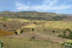 Campi del raccolto e di agricoltura in Etiopia Immagini Stock