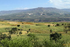 Campi del raccolto e di agricoltura in Etiopia Fotografie Stock Libere da Diritti