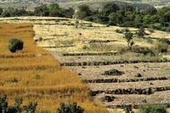 Campi del raccolto e di agricoltura in Etiopia Fotografia Stock