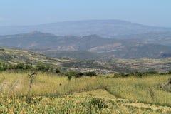 Campi del raccolto e di agricoltura in Etiopia Fotografie Stock