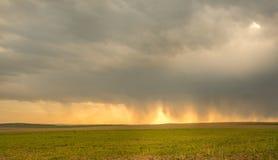 Campi del seme di ravizzone giallo con cielo blu nei precedenti Fotografie Stock Libere da Diritti