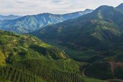 Campi del tè nelle montagne Fotografie Stock Libere da Diritti