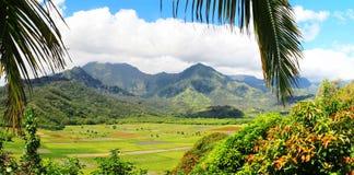 Campi del taro, valle di Hanalei, Kauai, Hawai Immagini Stock