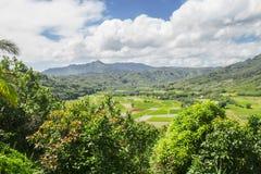Campi del taro, valle di Hanalei, Kauai, Hawai Fotografia Stock Libera da Diritti