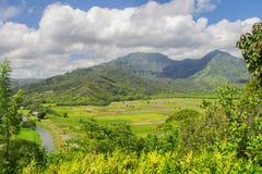 Campi del taro, valle di Hanalei, Kauai, Hawai Immagine Stock Libera da Diritti