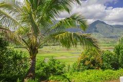 Campi del taro, valle di Hanalei, Kauai, Hawai Fotografia Stock